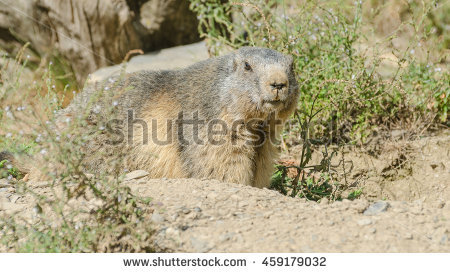 Sylvia Adams's Portfolio on Shutterstock.