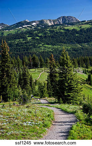 Stock Image of Path through a series of alpine meadows in Manning.