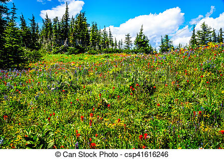 Stock Photo of Hiking through the mountain alpine meadows with.