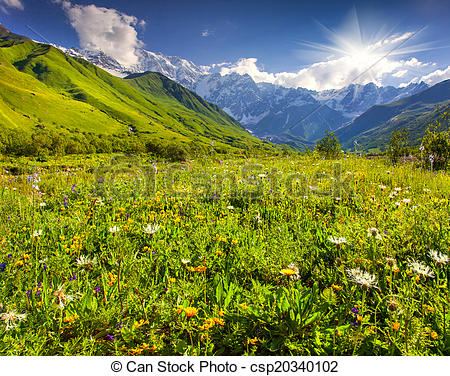 Stock Photography of Alpine meadows at the foot of Tetnuldi.
