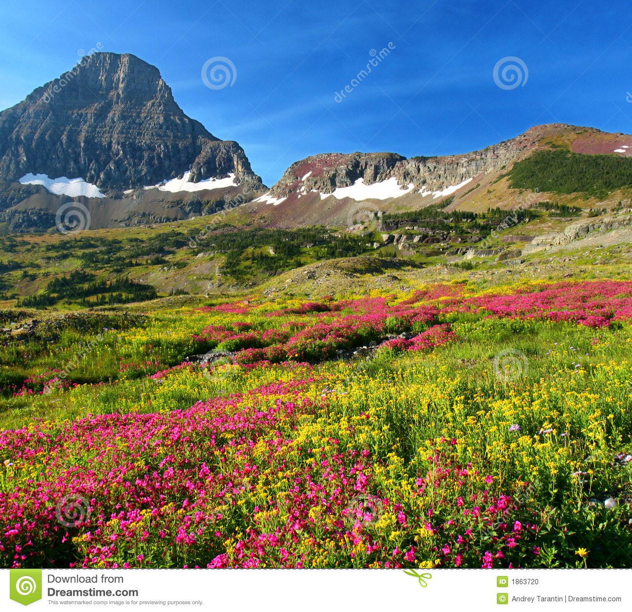Alpine Meadows Stock Photo.