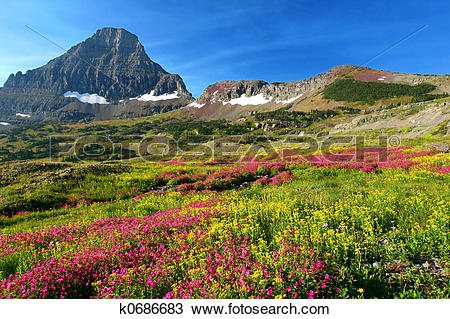 Stock Photo of Alpine Meadows k0686683.