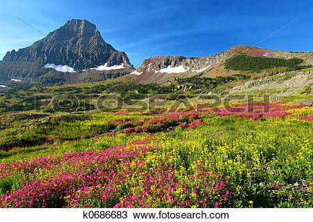 Stock Photo of Alpine Meadows k0686683.