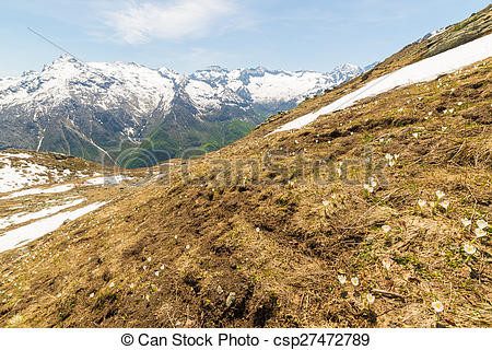 Pictures of Alpine flowers and landscape in springtime.