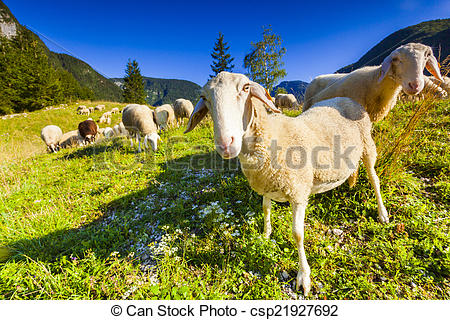 Stock Photographs of Alpine pastures in the Slovenian Alps.