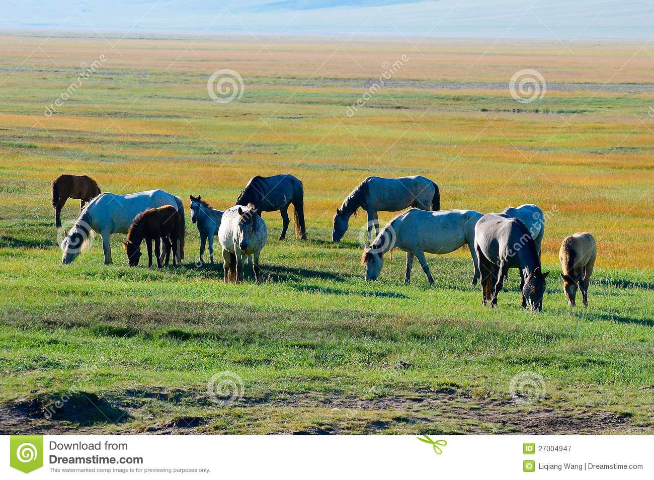 Alpine Pastures Royalty Free Stock Photography.