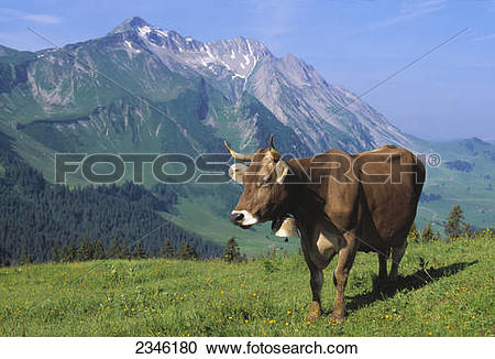 Stock Photography of Livestock.