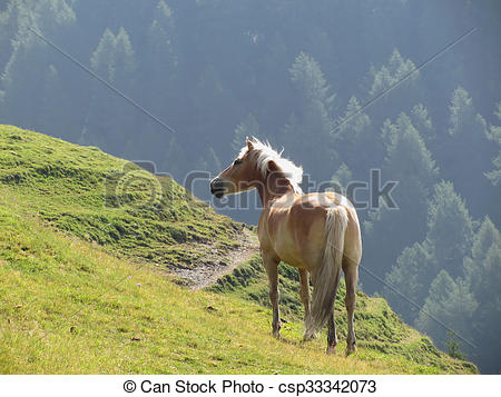 Picture of Single horse in an alpine pasture . Sesto Dolomites.