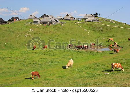 Stock Photo of Alpine meadow pasture, Slovenia.