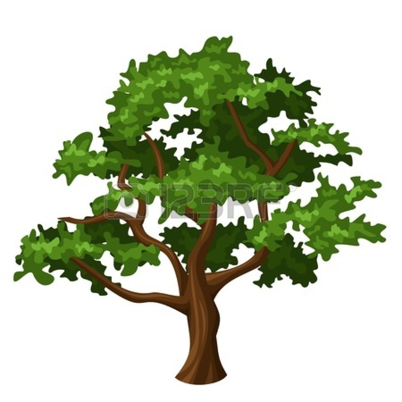Oak Tree Clipart Images.