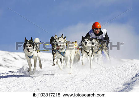 """Pictures of """"Alpine Trail Sled Dog Race 2012, Huskies, Prato."""