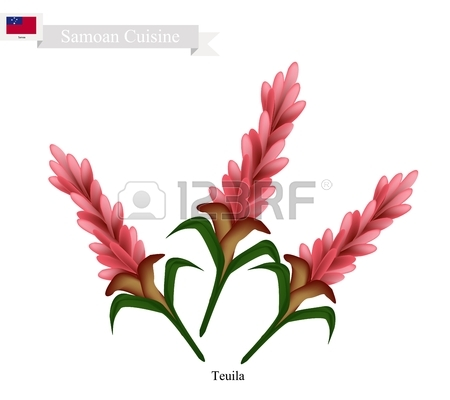 Samoa Flower, Illustration Of Teuila, Alpinia Purpurata Or Red.