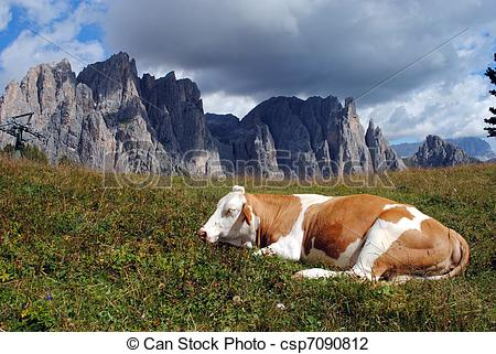 Stock Photo of brown cow rests in the grass with alps background.