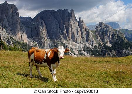Stock Photos of brown cow looking at camera with alps background.