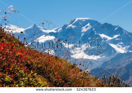 Portfólio de cdbr225 no Shutterstock.