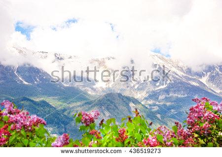 Panorama Flowers Stock Photos, Royalty.