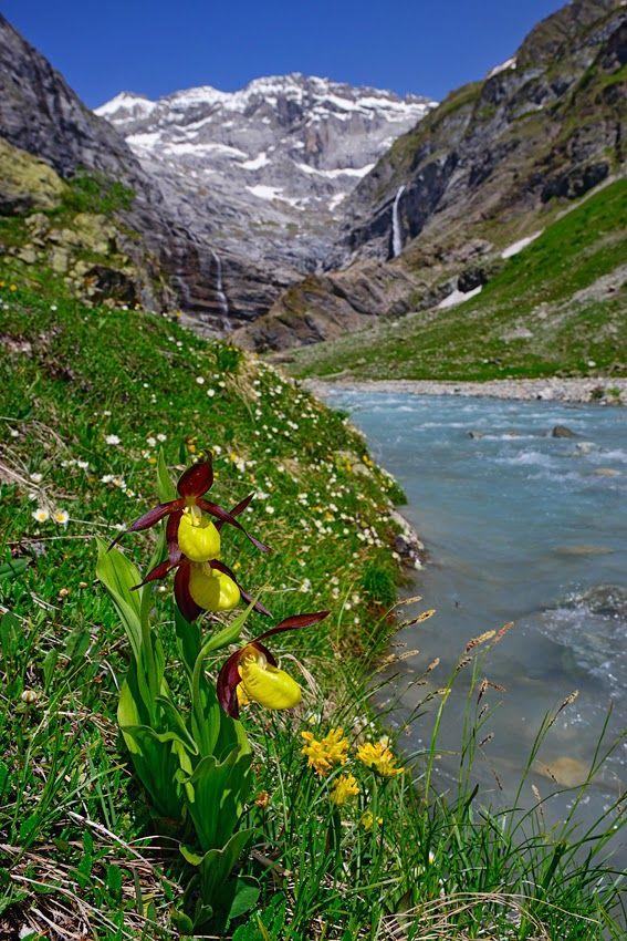 1000+ images about Steingarten/ Alpine Rock Garden on Pinterest.