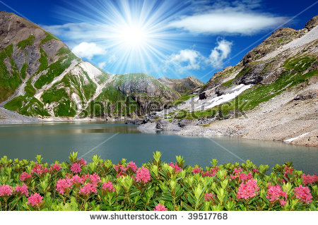 Alpine Plant Stock Photos, Images, & Pictures.