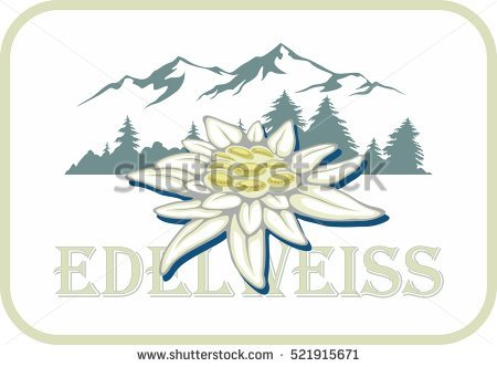 Edelweiss Lizenzfreie Bilder und Vektorgrafiken kaufen.