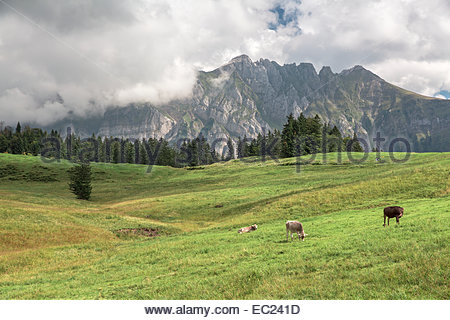 Appenzell Canton Stock Photos & Appenzell Canton Stock Images.
