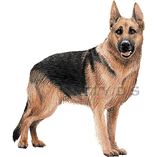 German Shepherd Clipart.