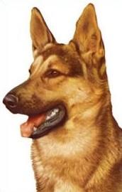 Free German Shepherd Clipart.