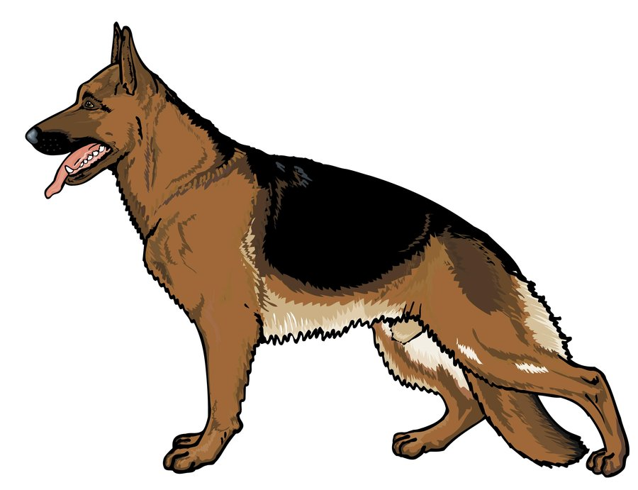 dutch shepherd dog clipart.