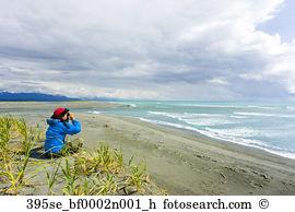 Gulf alaska Images and Stock Photos. 238 gulf alaska photography.