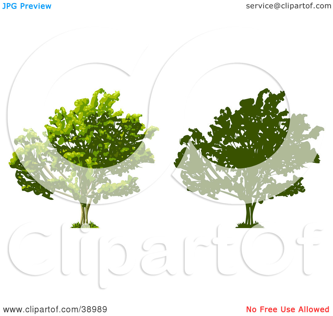 Clipart Illustration of a Tree Thick With Foliage, Also Shown In.
