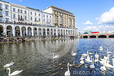 Flock Of Swans At The Alster In Hamburg Editorial Stock Image.