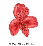 Alstroemeria Vector Clipart EPS Images. 91 Alstroemeria clip art.
