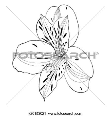 Clipart of beautiful monochrome, black and white Alstroemeria.