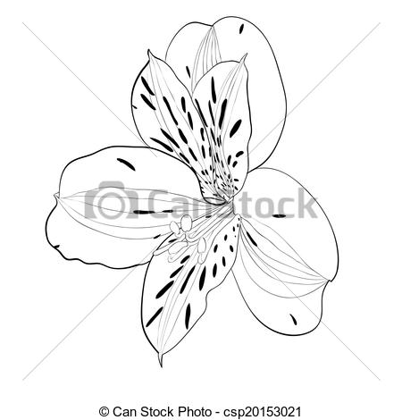 Vector Illustration of beautiful monochrome, black and white.