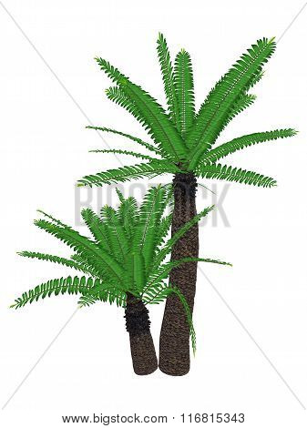Cycad Images, Stock Photos & Illustrations.