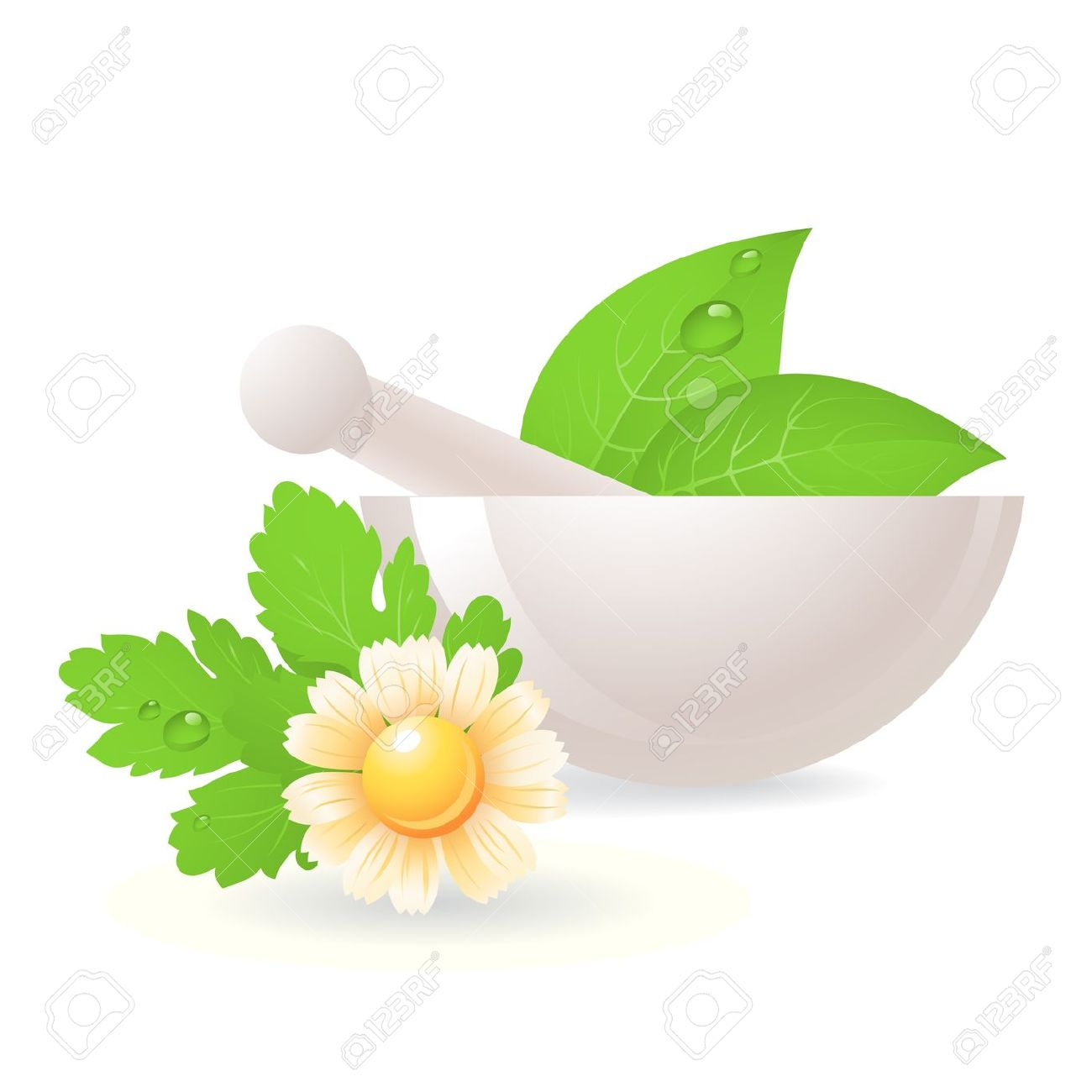 Mortar With Herbs And Camomile,alternative Medicine. Royalty Free.