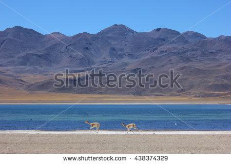 Chile Fauna Stock Photos, Royalty.
