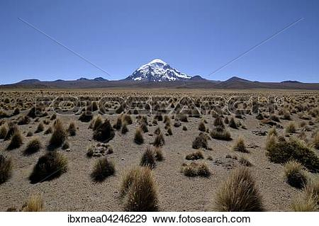 Stock Photograph of Salaam volcano with ichu grass (Stipa ichu) in.