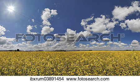"""Stock Photo of """"White clouds against a blue sky over a bright."""
