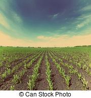 Picture of Vintage Corn Planter.