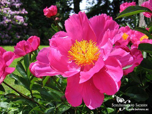 Altzella Flower and Garden Show.