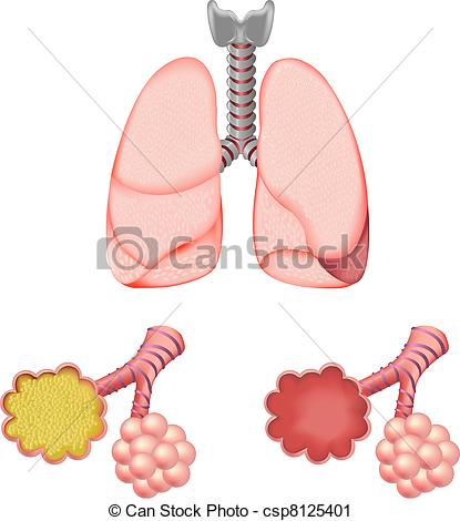 Vector Clip Art of Alveoli In And Lungs, Isolated On White.