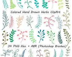 Images For > Herbs Plants Drawing.