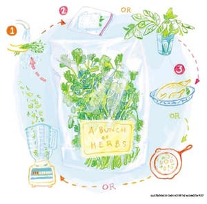 How To Store Fresh Herbs.