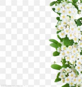 Alyssum Images, Alyssum PNG, Free download, Clipart.