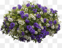 Sweet Alyssum PNG and Sweet Alyssum Transparent Clipart Free.