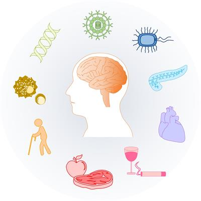 Risk Factors for Alzheimer\'s Disease.