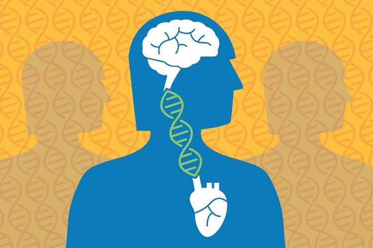 Alzheimer\'s Genetically Linked to Cardiovascular Disease.