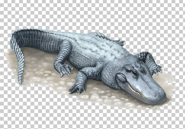 Nile Crocodile American Alligator Chinese Alligator PNG.