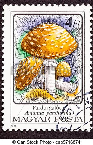 Drawing of Canceled Hungarian Postage Stamp Amanita pantherina.