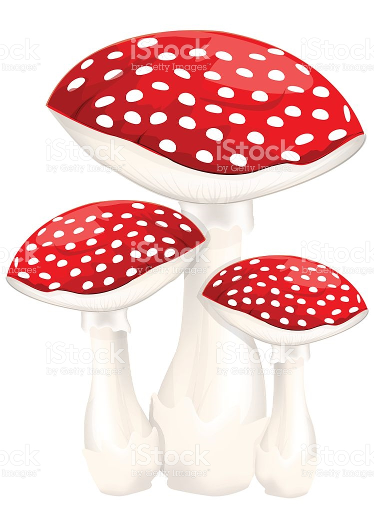 Red Poison Mushrooms stock vector art 475264182.